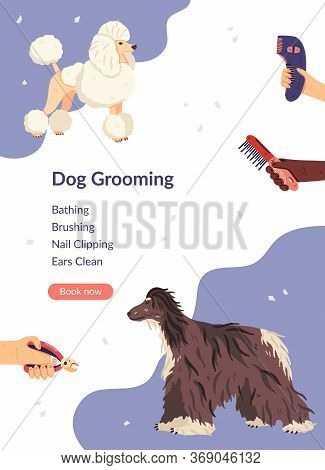 Dog Grooming Card Template Vector Illustration. Flat Poodle And Afghan Hound With Groomers Hands Aro