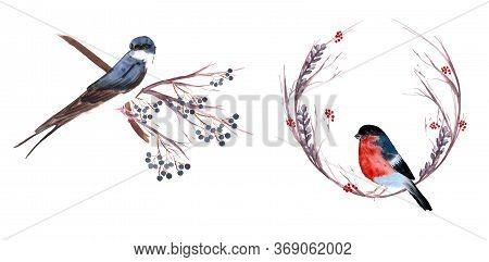 Set Of Birds: Swallow, Cardinal, Capercaillie, Black Grouse, Tit, Oriole, Bullfinch