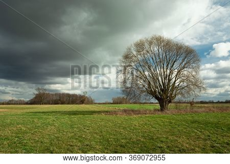 Leafless Tree On A Green Meadow And Dark Cloud On The Sky, Spring View