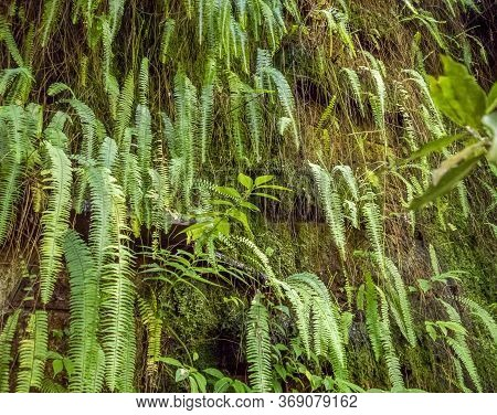 Wet Rock Face With  Green Fern Frond Vegetation