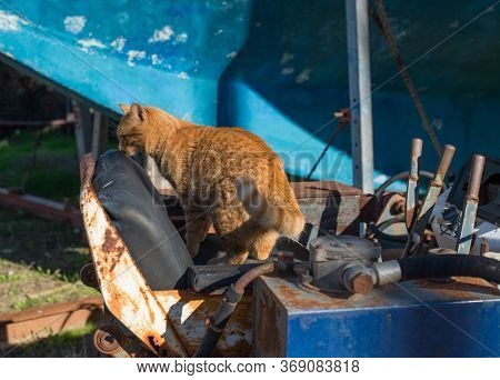 Red Stray Cat On A Rusty Abandoned Bulldozer
