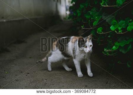 The Cat Hid Behind A Bush.the Cat Hid Behind A Bush