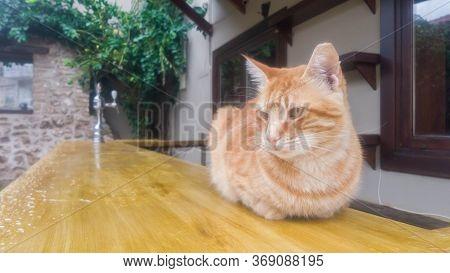Stray Ginger Cat On Bar Counter Outside Street Cafe