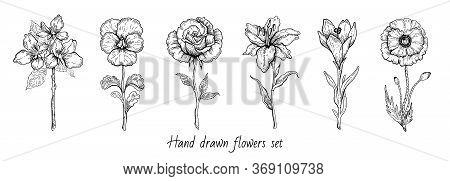 Flower Set. Rose, Poppy, Lily, Cherry Blossom. Vector Floral Graphic, Sketch Plant Illustration. Bla