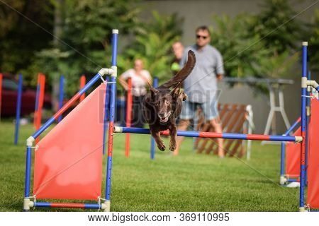 Brown Kelpie In Agility Tunel On Ratenice Competition. Amazing Day On Czech Agility Competition In T