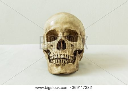 Human Skull On A White Background For Anatomical Study.
