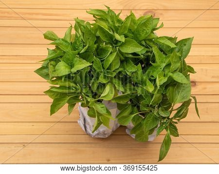 A Lot Of Peper Seedlings On Wooden Background