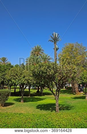 Oriental Garden With Orange Trees In Marrakesh, Morocco