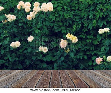Empty Wooden Floor, Table On A Green Natural Background With Blooming Roses. Mockup, Layout For Plac