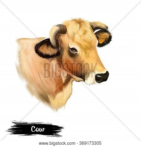 Cow Head Isolated On White Background Digital Art Illustration. Domestic Brown Young Animal Which Br