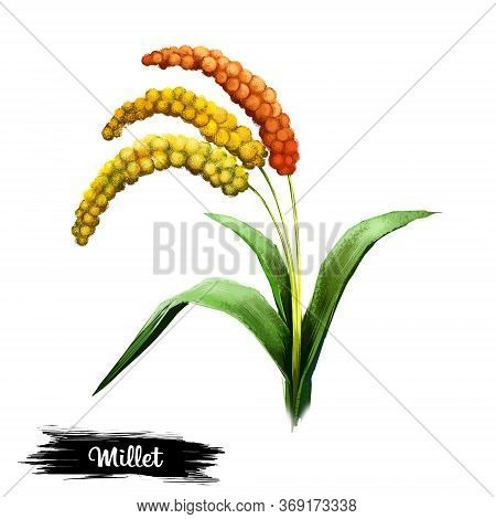 Millet Plant Isolated On White Background Digital Art Illustration. Herb With Seeds And Green Leaves
