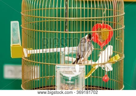 Couple Of Beautiful Parrot In Home Cage.