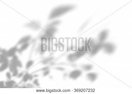 Summer Plant Shadow Background. Shadow Of An Exotic Plant On A White Wall. White And Black For Super