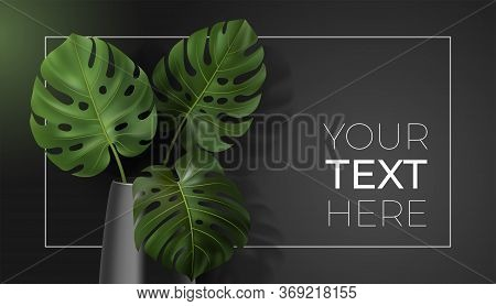 Vector Poster With Green Tropical Leaves Monstera In Vase On Dark Background. Botanical Illustration