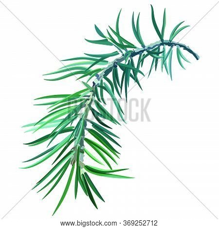 Sprig Of Spruce. Fir Tree. Postcard For New Year And Christmas. Vector Illustration, Eps 10.