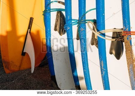 Many Blue And White Surfing Longboard With Surf Fins And Leash Ready For Rent. Set Of Multicolored S