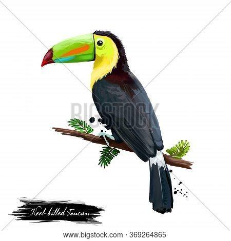 Keel-billed Toucan Digital Art Illustration Isolated On White. Sulfur-breastedor Rainbow-billed Touc