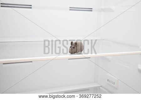 Mouse On The Shelf Of An Empty Fridge. Empty Fridge, Inside. Mouse Hanged