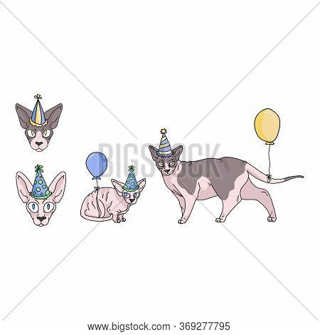 Cute Cartoon Sphynx Cat Party Set Vector Clipart. Pedigree Exotic Breed For Cat Lovers. Purebred Cel