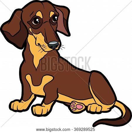 Cartoon Character Dog Dachshund. Vector Dog On Isolated White Background. Dachshund Sticker, Print,