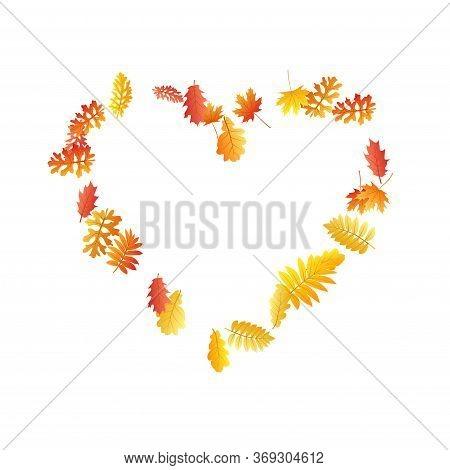 Oak, Maple, Wild Ash Rowan Leaves Vector, Autumn Foliage On White Background. Red Orange Gold Rowan