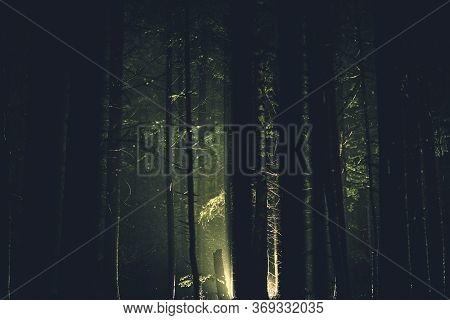 Mystery Dark Forest Light. Strange Illumination In The Woodland.