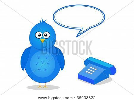 Contact details with bird and telephone