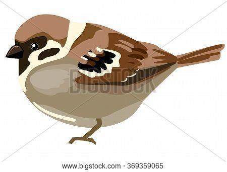 Sparrow Bird Vector. Bird Isolated On White Background. Vector Illustration.
