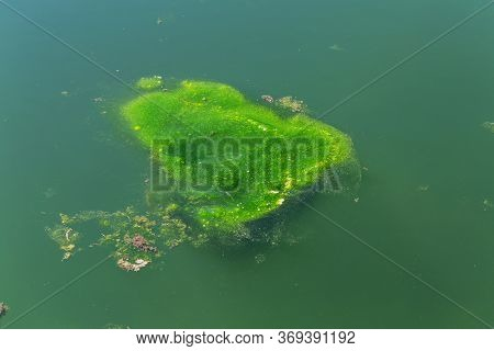 Large Amount Of Debris And Dirty Waste Water Caused Rapid Growth Of Algae In Lake. Water Pollution.