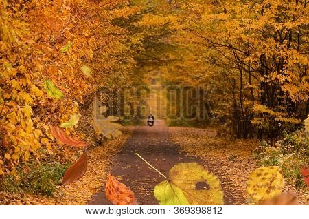 Falling Color Trees Foliage. Frame Of Fallen Autumn Leaves In The Forest.