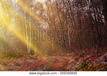 Beautiful Sunset Scenery Of Autumn Forest. Golden Hues Autumn Leaves