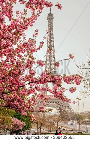 Paris, France - April 7, 2019: Beautiful View On Eiffel Tower With Sakura Tree In Sunset From The Tr