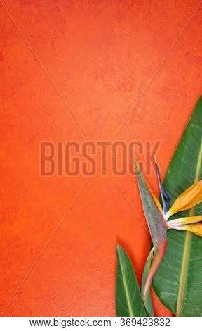 Tropical Theme Bird Of Paradise Flowers On An Orange Textured Background.