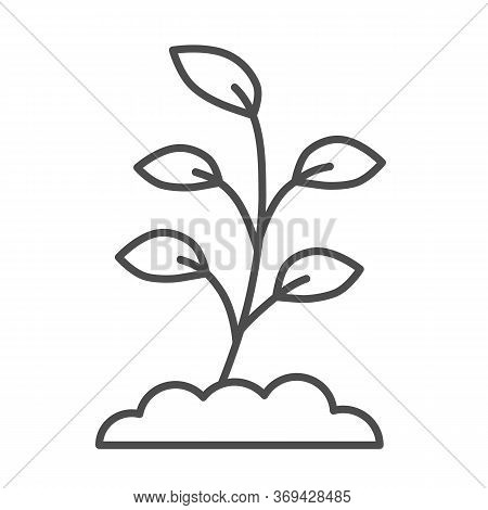 Small Sprout With First Leaves Thin Line Icon, Spring Concept, Sprout Sign On White Background, Seed