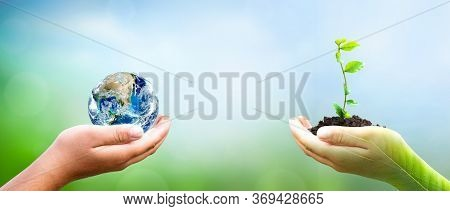 World Environment Day Concept: Hand Holding Tree Planting And  Earth On  Green Nature Background, Th
