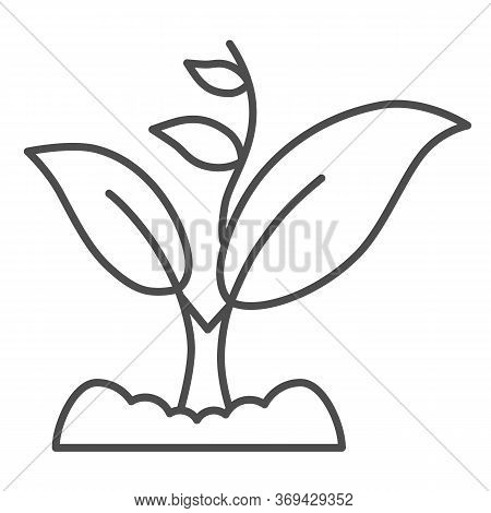 Sprout Grows With Many Leaves Thin Line Icon, Gardening Concept, Sprout Symbol On White Background,