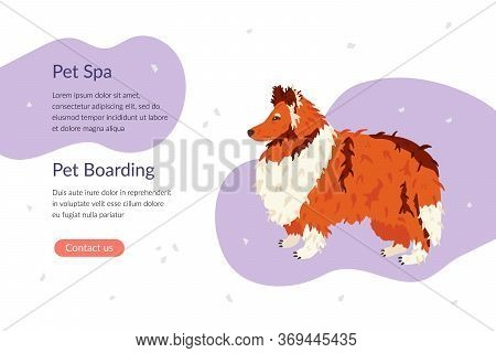 Pet Spa And Pet Boarding Landing Page Template. Collie Dog Breed. Flat Vector Illustration. Pet Care