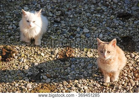 Two Young Kittens - A Ginger Brother And White Sister - Sit Together In The Warmth Of The Winter Sun