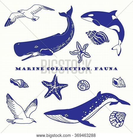 Set Of Isolated Elements On The Marine Theme. Seagulls, Sperm Whale, Killer Whale, Striped Whale, Sh