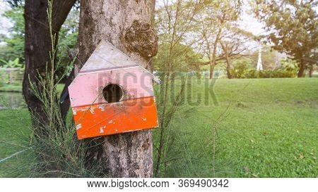 A Pink And Orange Color Wooden Squirrel\'s House Dwelling, Hanging On The Pine Tree In The Public Pa
