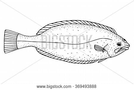 Spottail Spiny Turbot. Hand Drawn Realistic Black Line Illustration.