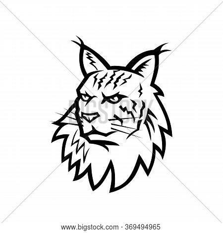 Black And White Sports Mascot Illustration Of Head Of An Angry Maine Coon, Maine Shag Or Coon Cat, T