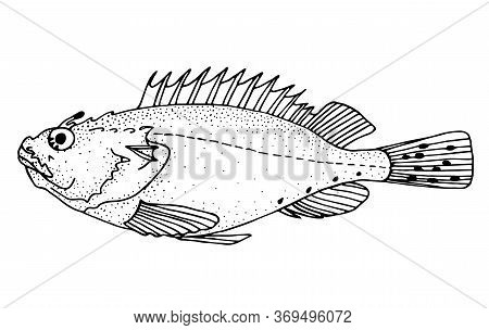 Black Scorpionfish. Black Hand Drawn Realistic Outline Vector Image.