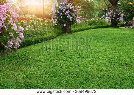 A Fresh Green Lawn In The Park, Pink Dendrobium Hybrid Orchid Climbing On The Trees And White Hollyh