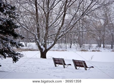 December Benches