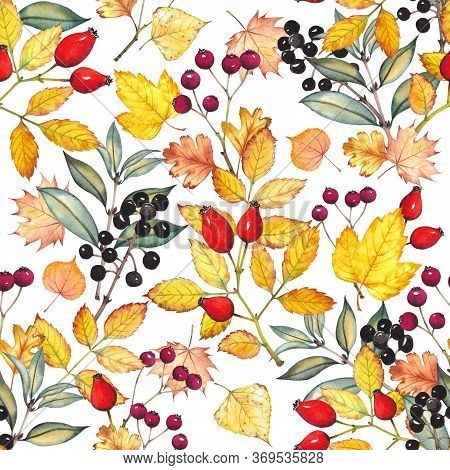 Seamless Pattern With Colorful Autumn Leaves And Berries. Rosehip, Hawthorn And Common Privet Plants