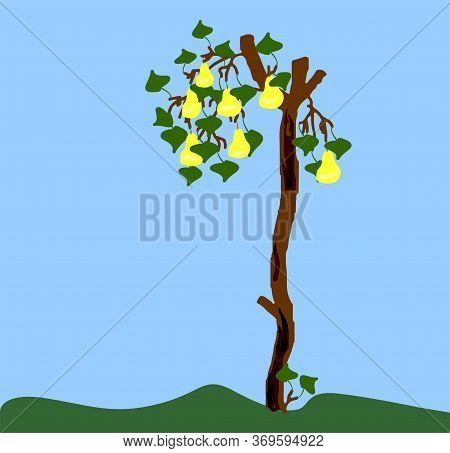 Old Pear With Sawn Branches And Charred Bark And On Small Branches Green Leaves And Yellow Pears. Im