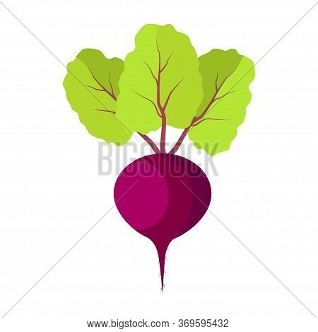 Beet With Green Leaves On White Background. Red Beet Root.