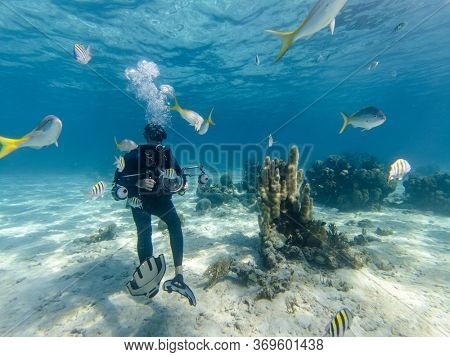 Matanzas, Cuba - December 15, 2019: Scuba Diver photographing Underwater Tropical Yellow Bright Striped Fish On Crystal Clear Blue Shallow Water At Summer.