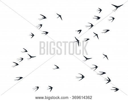 Flying Swallow Birds Silhouettes Vector Illustration. Migratory Martlets Group Isolated On White. Pi